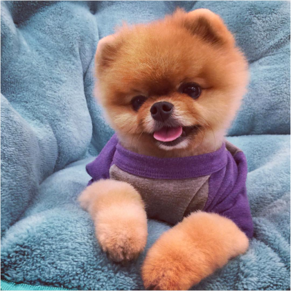 Source: https://instagram.com/jiffpom/